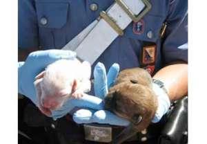 carabinieri-cuccioli
